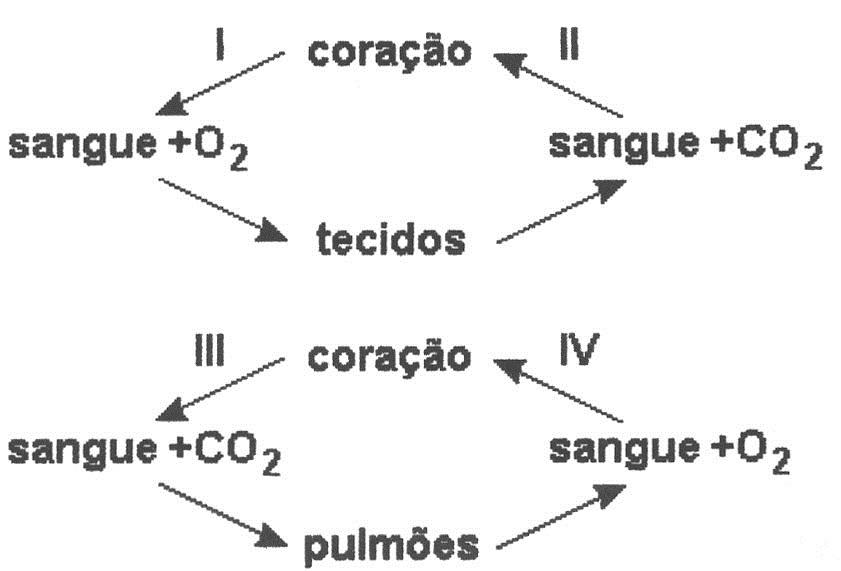 Testes de sistema circulatório (3/3) | Blog do Prof. Djalma Santos