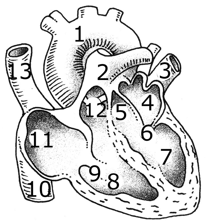 De no sistema 3 tipos vasos circulatório sanguíneos