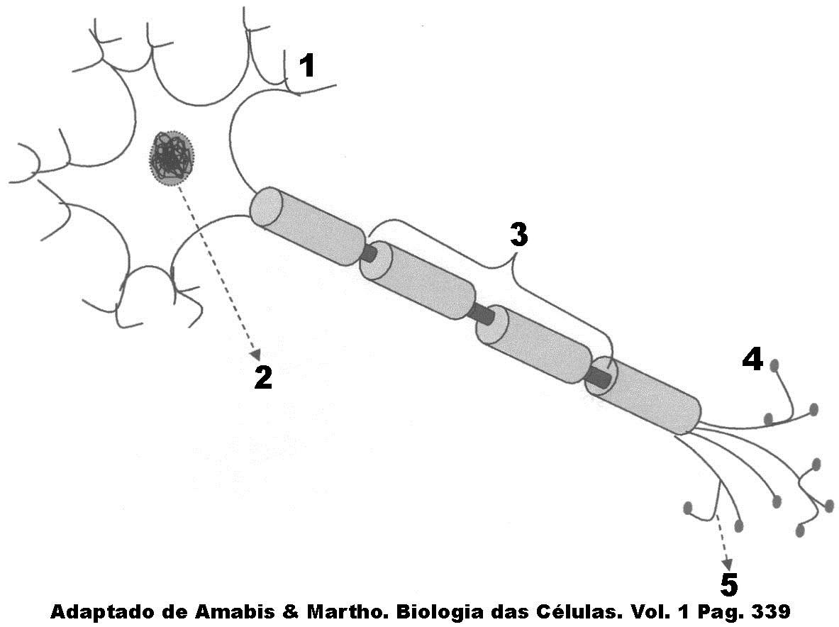 Testes De Sistema Nervoso 1 4 Blog Do Prof Djalma Santos