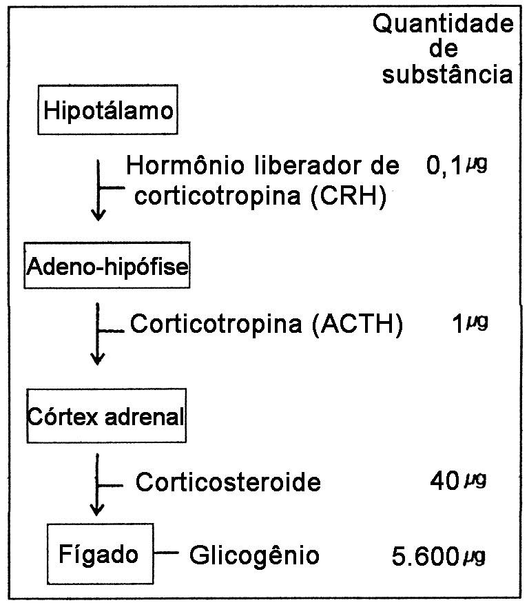 Testes de sistema endócrino (1/4) | Blog do Prof. Djalma Santos