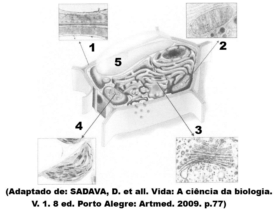 Testes De Citoplasma 13 Blog Do Prof Djalma Santos