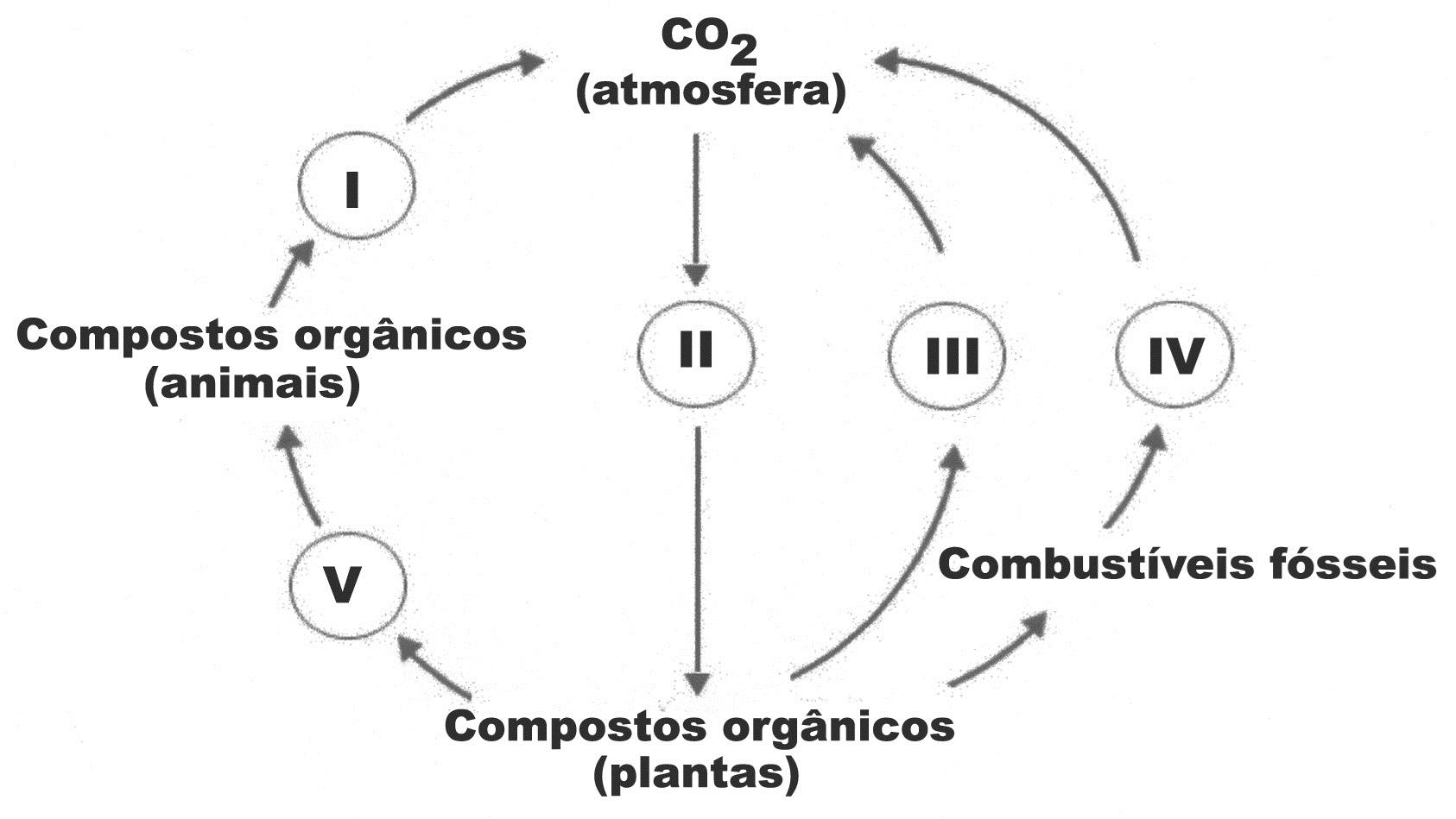Testes De Ciclos Biogeoquímicos 13 Blog Do Prof Djalma Santos
