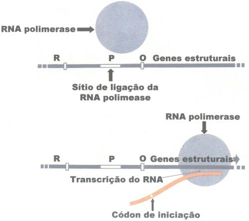 02.GENES