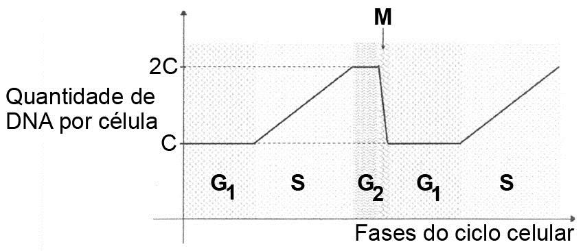 ciclo correto de stanozolol injetavel