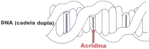 acridina.5