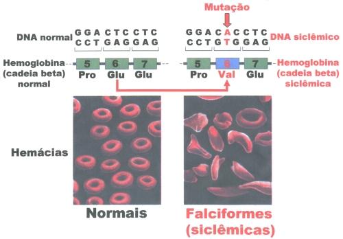 anemia.8