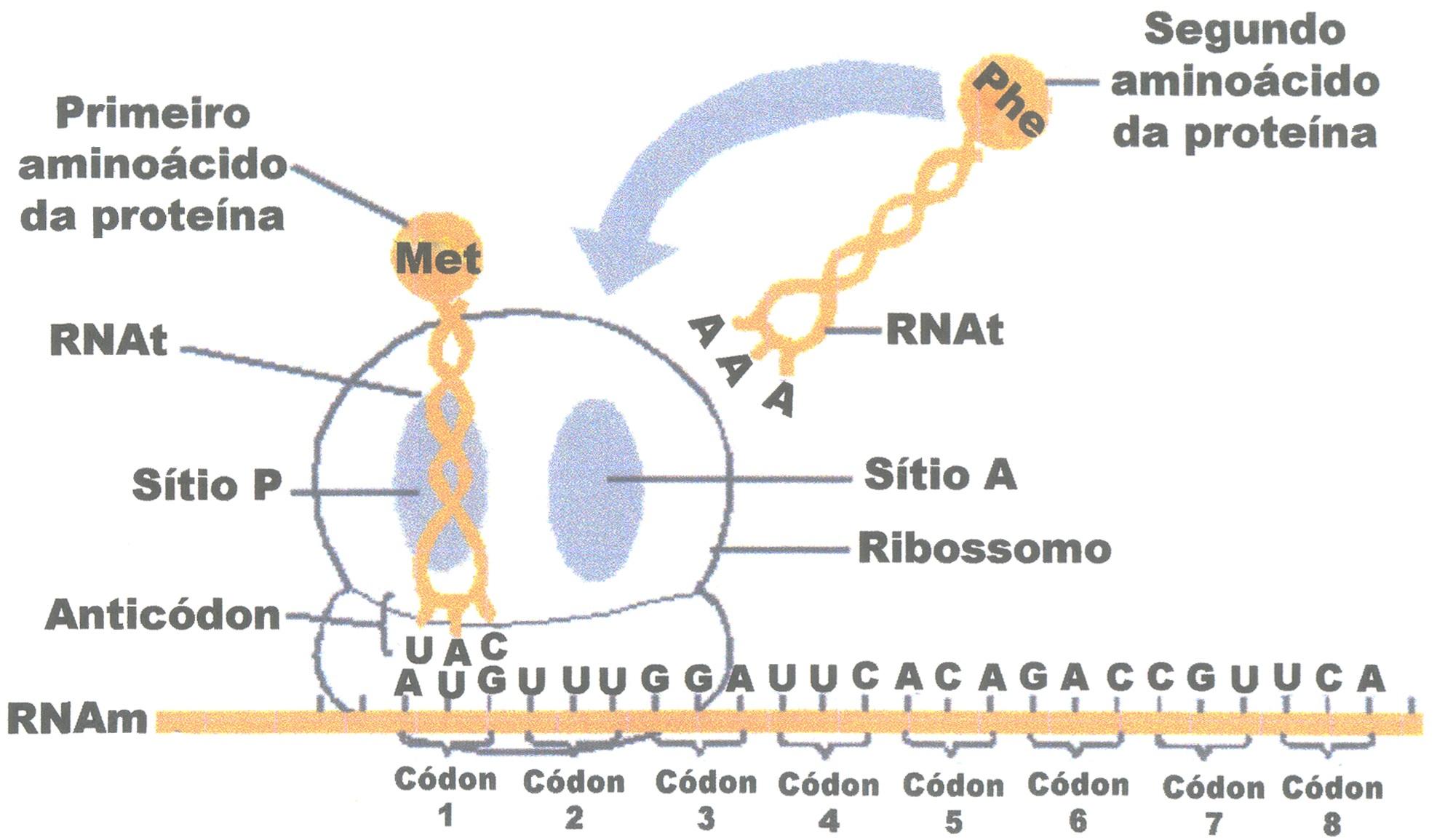 Amabis fundamentos da biologia moderna download