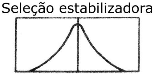 06.EST