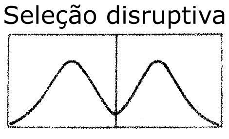 08.DISR