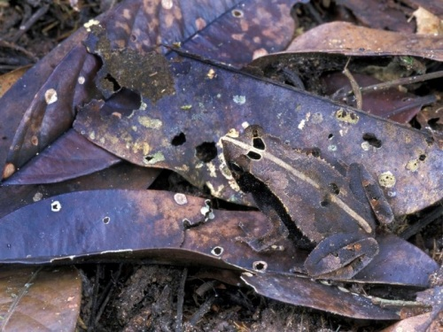 07.camuflagem