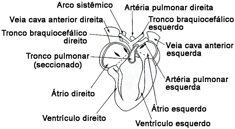 Testes De Sistema Circulatório Blog Do Prof Djalma Santos