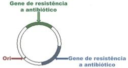 04.plasmideo