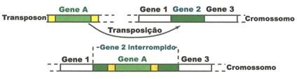 06.genomica