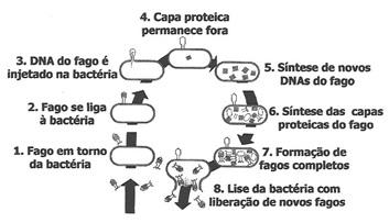 09.outrasbacteria