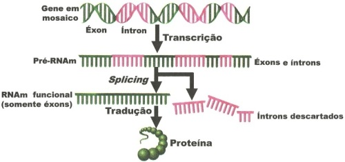 RNAmensageiro