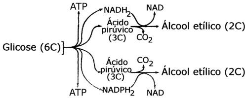 alcol.et.2