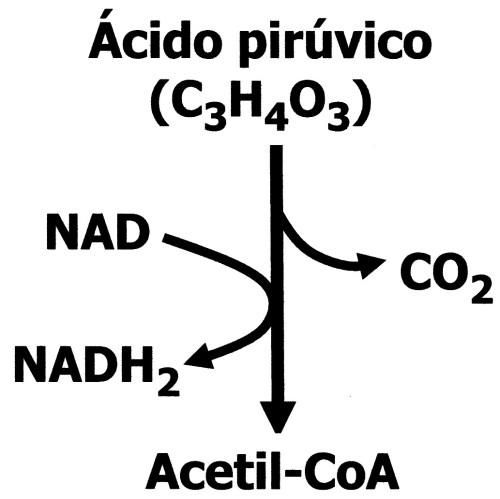 ácido pirúvico