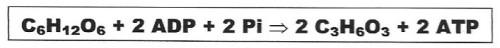 equação lactica