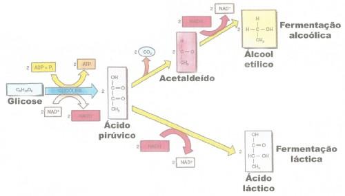 etanol.lactico