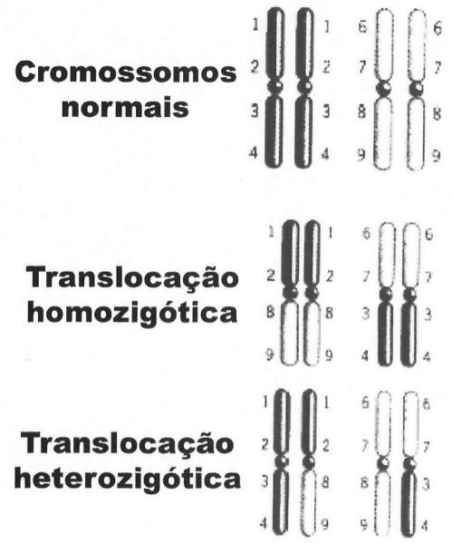 homo.heter